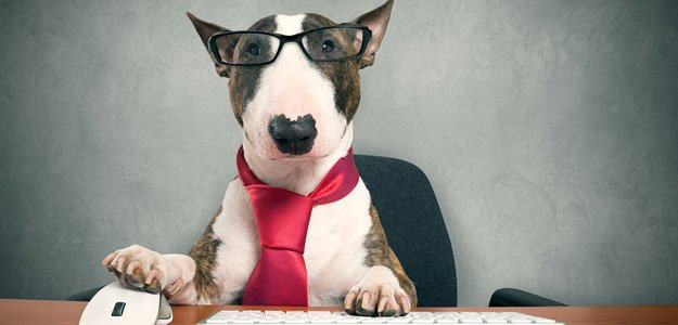 What Insurance Agents Can Learn From Dog Trainers