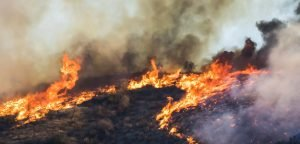 Long, Hot Summer: How Will the Coming Fire Season Impact Your Clients?
