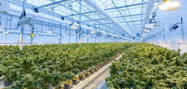 Read more about the article The Highs and Lows of E&O Insurance for Cannabis Businesses